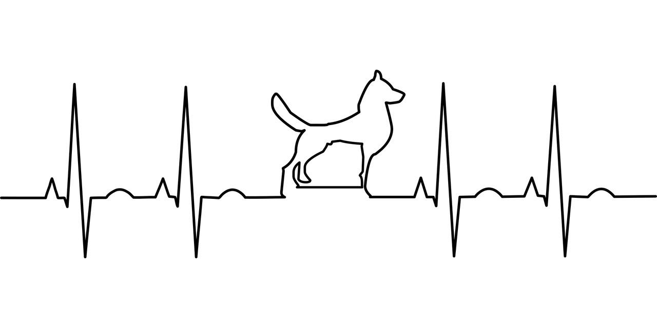 Tierarzt Kornwestheim,Tierärzte Kornwestheim, Tierarztpraxis Kornwestheim, Tierarzt am Rathaus, Tierarztpraxis am Rathaus, Dr. Anette Funk-Eisele, Kleintierpraxis Kornwestheim, Notfallpraxis für Tiere, Tierarzt Fun-Eeisele, Akupunktur beim Tier, Akupunktur am Tier, Tierakupunktur, Fischkrankheiten, Kaninchen, Meerschweinchen, Schildkröten, Hunde, Katze, Zahnheilkunde, Alternativmedizin beim Tier, Homöopathie Tier, Phytotherapie, Neuraltherapie, Tierchirurgie, Operationen Tier